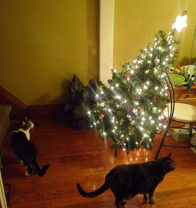 Σκύλοι και γάτες που κατέστρεψαν τα Χριστούγεννα Destroyed Christmas allabout.gr