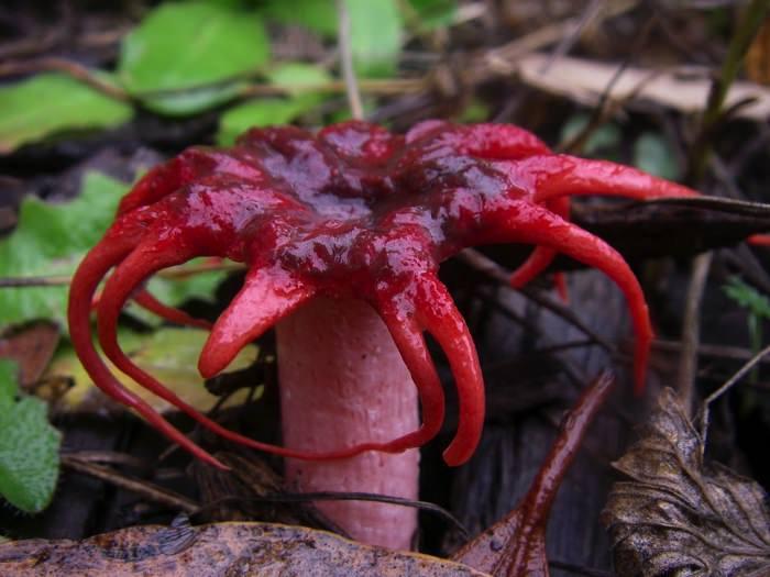 πιο παράξενα φυτά του κόσμου sea anemone