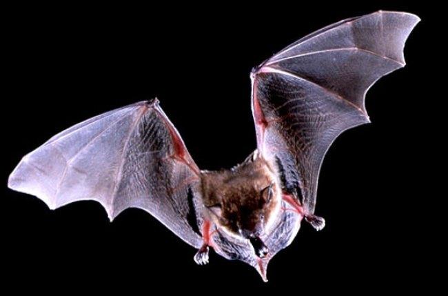 Τα 10 πιο θορυβώδη ζώα στον κόσμο allabout.gr