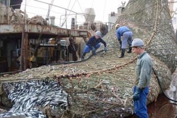 Ψαράδες έπιασαν μια μεγάλη ψαριά
