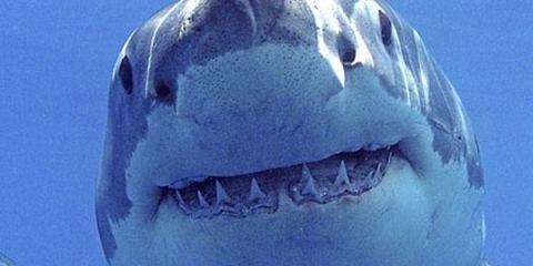Θαλάσσιο τέρας καταπίνει ολόκληρο καρχαρία