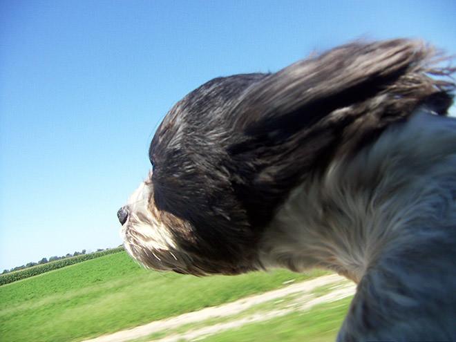 Κόντρα στον άνεμο