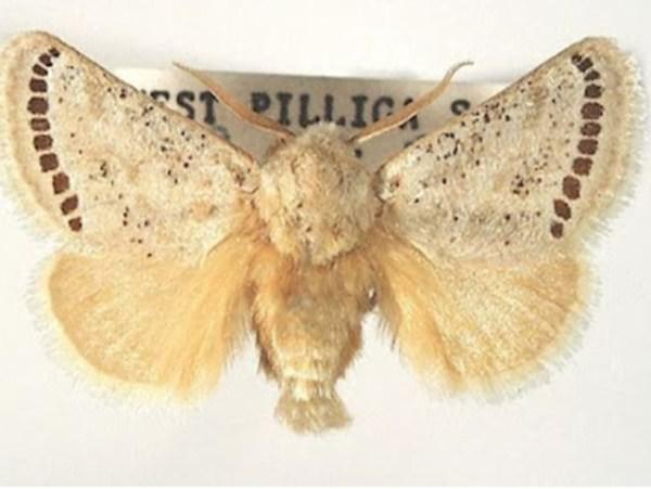 Κάμπιες μεταμορφώνονται σε πεταλούδες.
