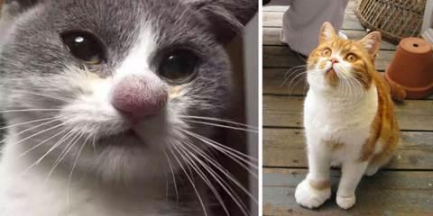 Γάτες που τις τσίμπησε μέλισσα ή σφήκα