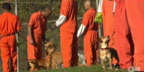 εγκαταλειμμένα σκυλιά σε κρατούμενους