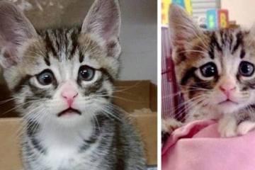 Το γατάκι που γεννήθηκε με τα συνεχώς ανήσυχα μάτια.