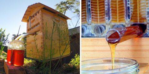 μελισσοκομία Κυψέλη μαζεύει αυτόματα το μέλι