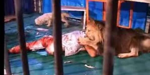 Λιοντάρι τρώει άνθρωπο