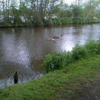 Across the Wey To Mill Pond