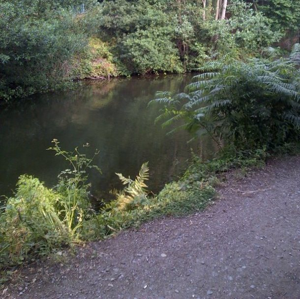 typical fishing swim Basingstoke canal