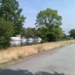 Fishing swims on the towpath at Ferry Road, Molesey