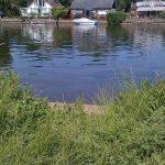 A Thames swim in Walton