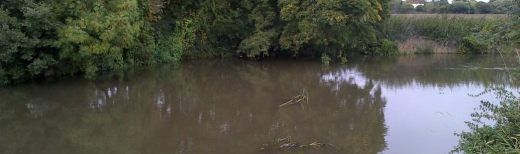 Fishing the Mole: Plough Meadows