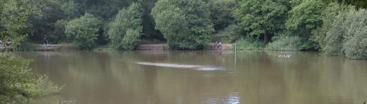 A view across an Epsom angling venue