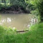 River Mole Brockham sq