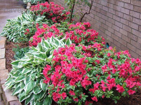 azaleas - don't wait to sell