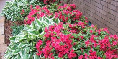 azaleas - don't wait to sell