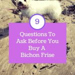 9 Best Questions To Ask Before You Buy A Bichon Frise