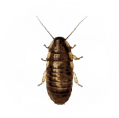 Cock Roach Pest Control for Sevierville TN and Surrounding Areas