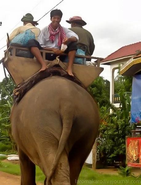 экзотическая камбожджа