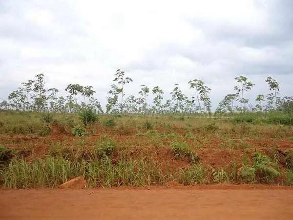 земля в камбодже