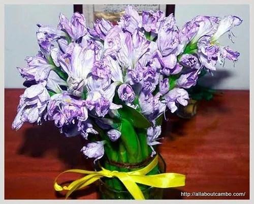 цветы в камбодже