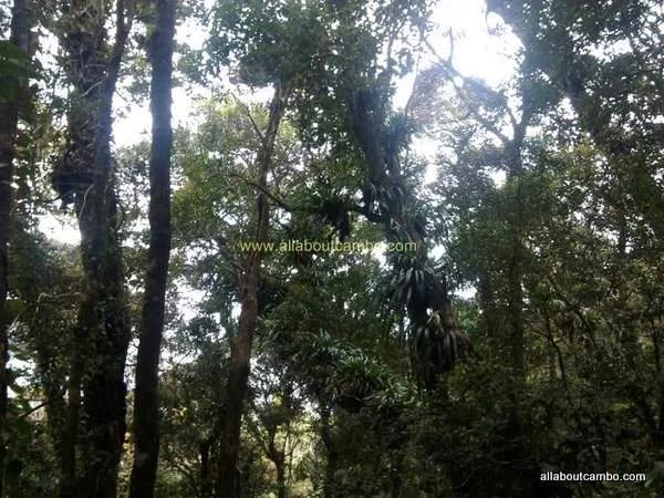 леса на борнео