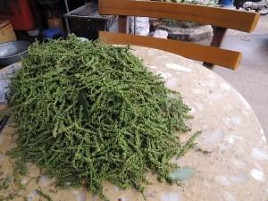 зеленый кампотский перец