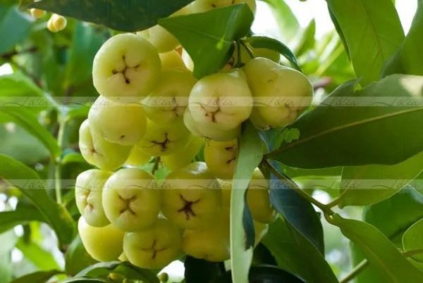 фрукты в камбодже