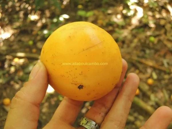 фрукты на борнео