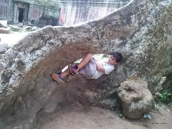 в дереве Та пром