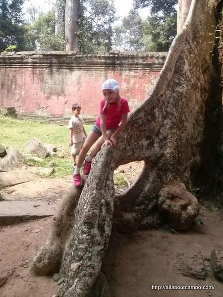 на корнях Ангкора