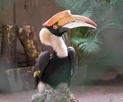 птицы в Камбодже