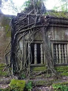 тропические деревья в камбодже