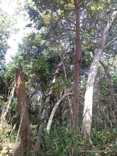 джунгли острова Кох Дамлонг
