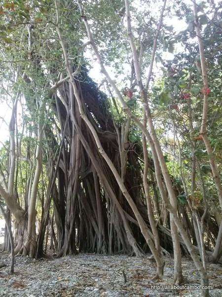 леса островов Камбоджи