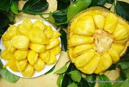 джекфрут камбоджа