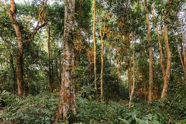 джунгли горы Пном кулен