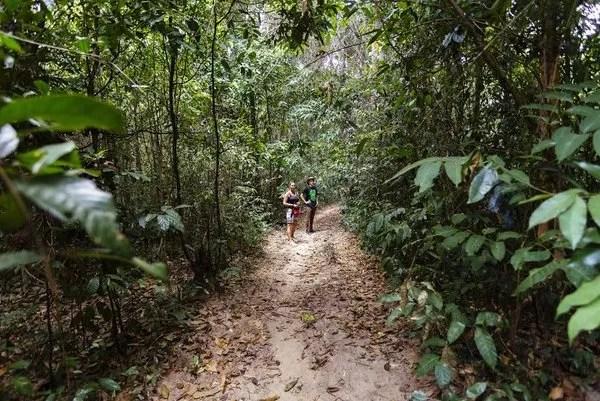 джунгли камбоджи