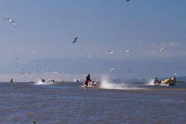 птицы озеро Инле