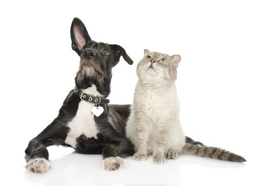 perros y gatos11