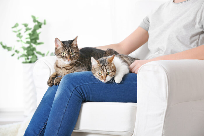 What to do if your cats are fighting