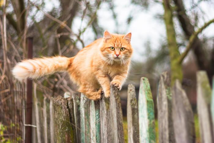 Gato naranja escalada en el cerco