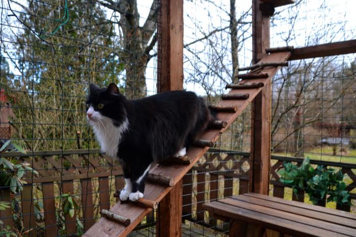 Gato en catio al aire libre