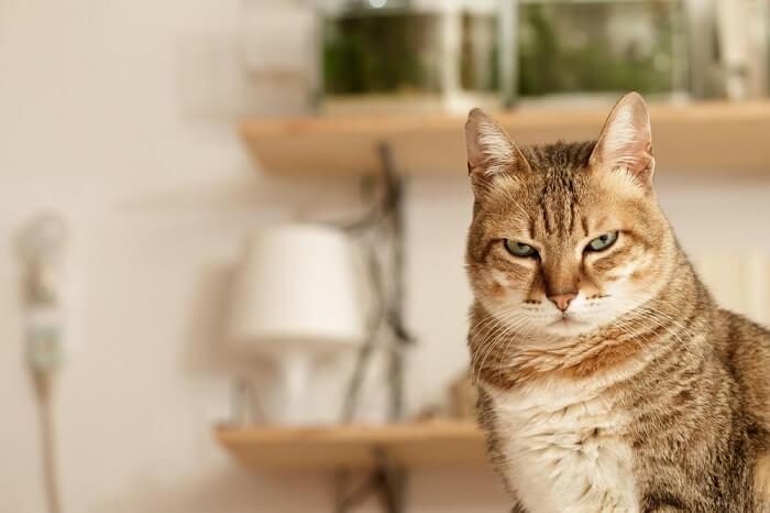 gato con aspecto cansado