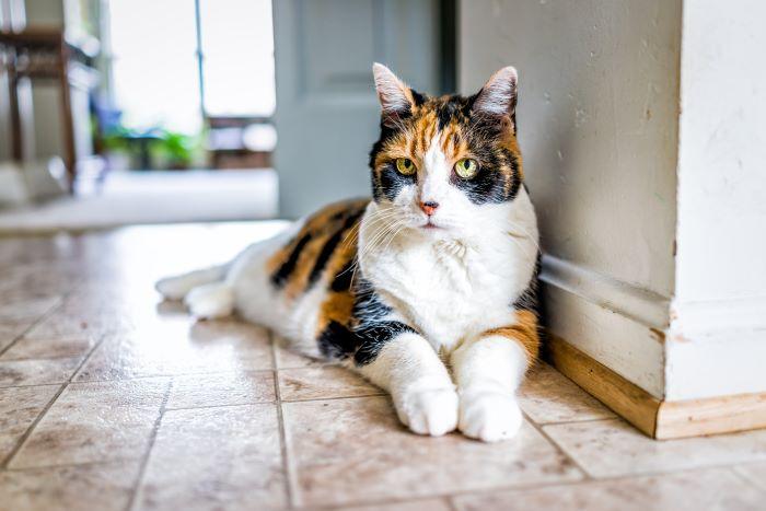 gato mirando con anticipación