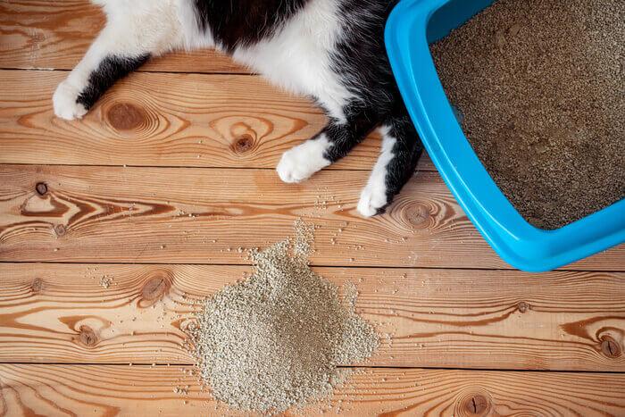 black and white cat lying on floor beside litter and litter box