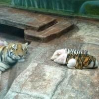 Animals Know Better