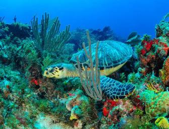 Isla Mujeres, Yucatan's Magical Paradise