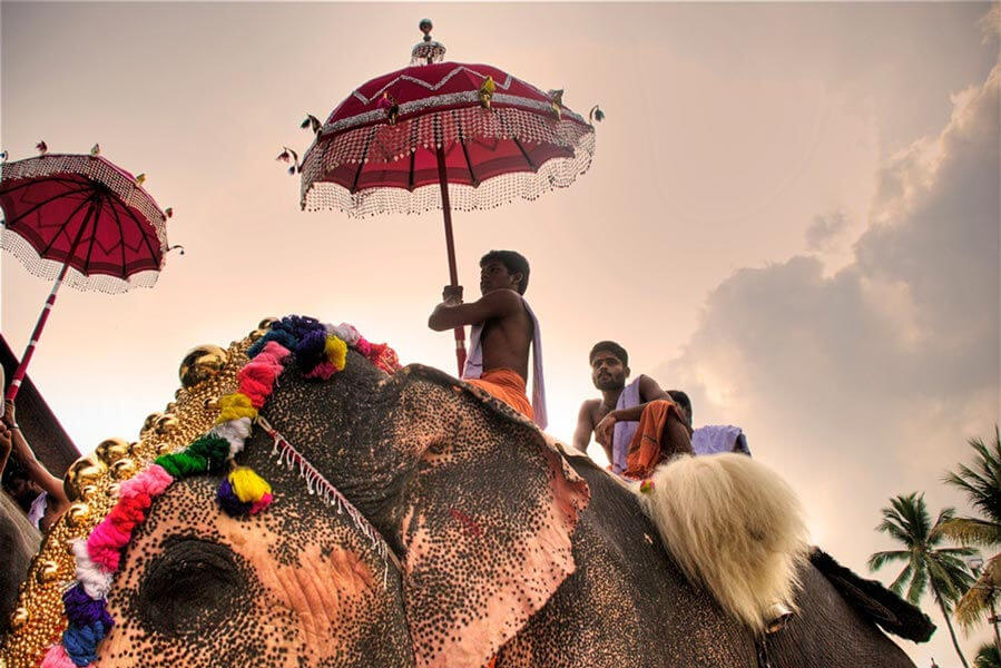 76-elephants-in-kerala-1